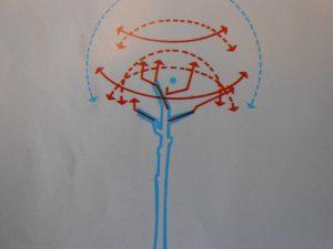 ricerca linee di forza di un pino